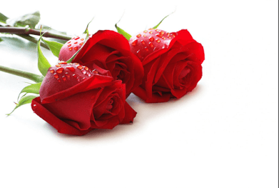 Red Rose Beautiful Wallpapers For Valentines Day