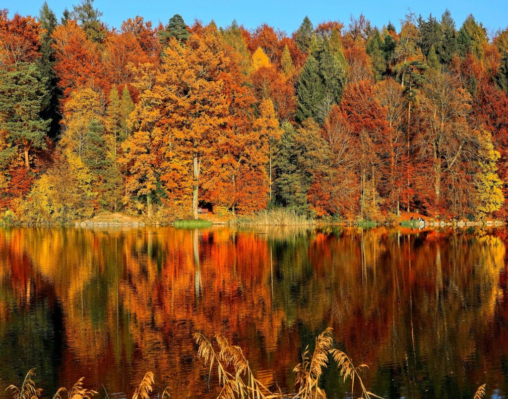 Enjoy fall colors in nature